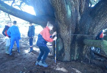 wk 8 year 5 veteran trees 018